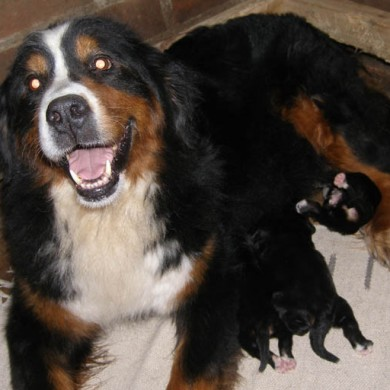 Donka muy feliz con sus cachorros