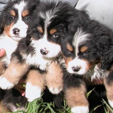Cachorros de Donka Nov 2007