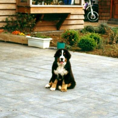 Angelo cuando era cachorro