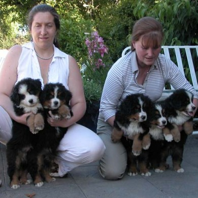 Cachorros Donka posando