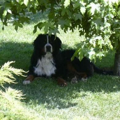 Descansando bajo la sombra de un árbol