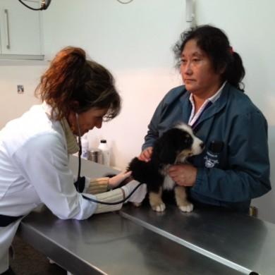Dra. Nora Prehn auscultando cachorro para su vacunación