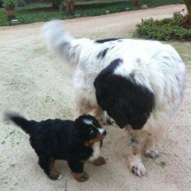 Primer encuentro de Joko D´Bolper con Baco en Cachagua